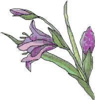 Purple Lily Cross Stitch Pattern